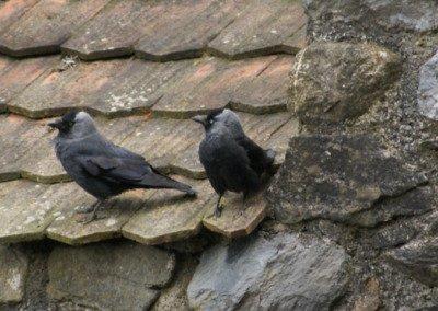 Vogelkolonien