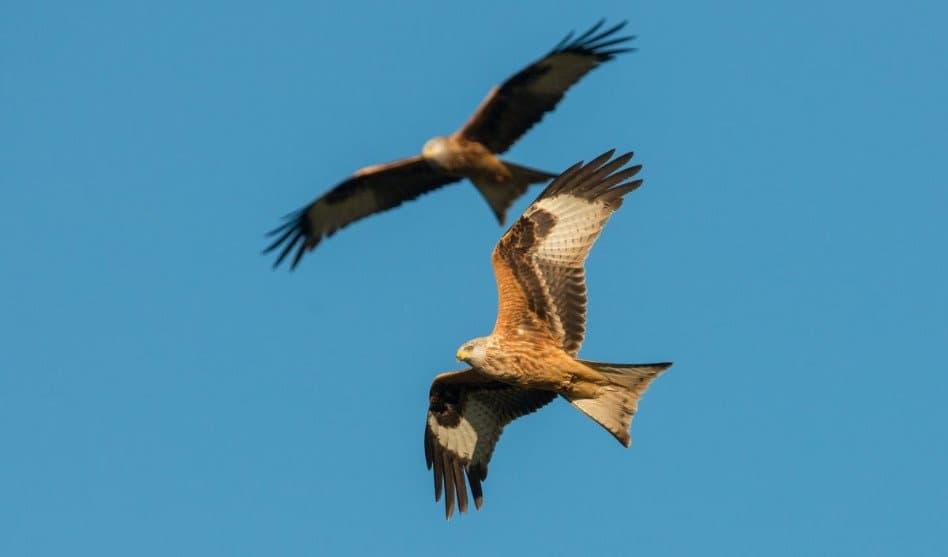EuroBirdwatch: Flugbetrieb über Vordemwald