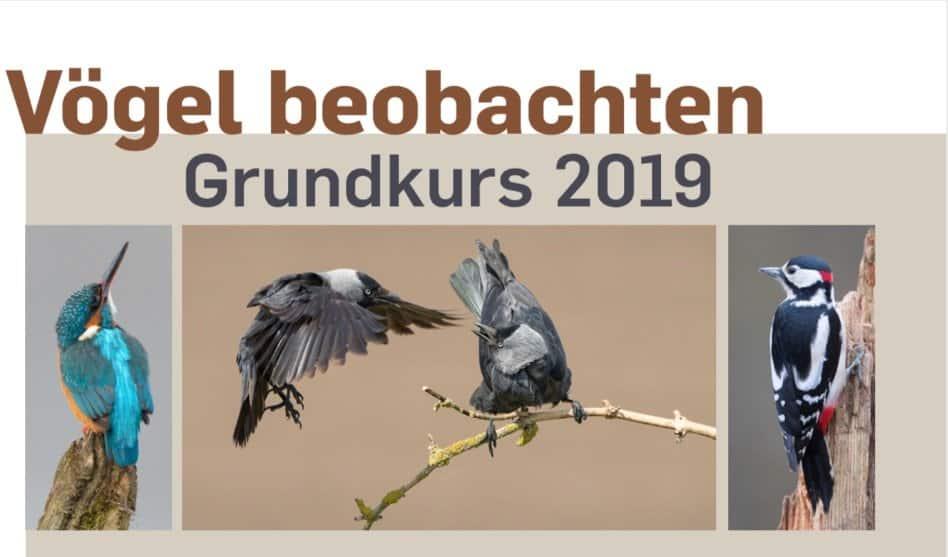 Neuer Vogelgrundkurs im Frühjahr 2019