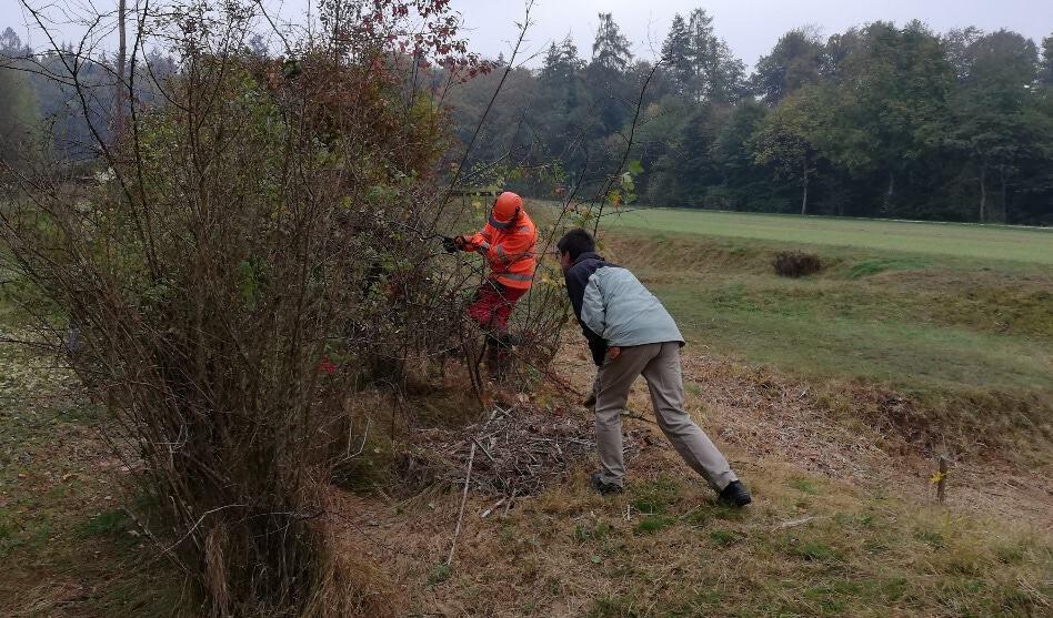 Arbeitstag am Samstag, 2. März: Es ist Zeit, um Hecken zu schneiden