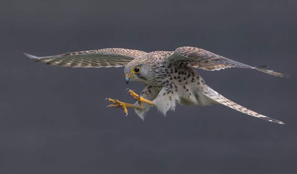 "Neue Kurse ""Vögel beobachten"" im Frühjahr 2020"