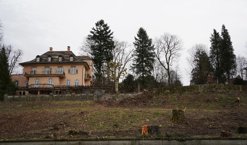 Bäume zur Unzeit und auf Vorrat gefällt – die Empörung ist riesig